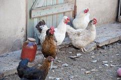 Кран и курица как символ Нового Года Стоковое Изображение RF