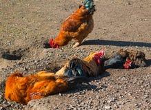 Кран и курицы Стоковые Изображения