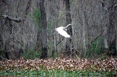 кран Луизиана Стоковое фото RF