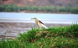 Кран на банке пруда Стоковая Фотография RF