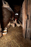 Кран с курицами в сельской доме курицы стоковое фото rf