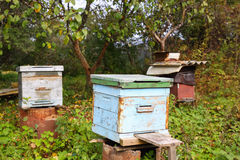 Крапивница пчелы в саде Стоковое фото RF