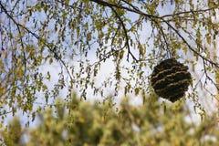 крапивница Стоковые Фотографии RF