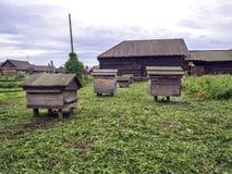 Крапивницы в пасеке при пчелы летая к посадке всходят на борт Стоковые Фотографии RF