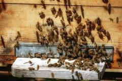 Крапивницы в пасеке при пчелы летая к посадке всходят на борт в g Стоковое Изображение