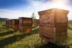 Крапивницы в пасеке при пчелы летая к посадке всходят на борт Стоковые Изображения