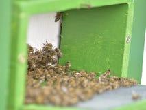 Крапивницы в пасеке при пчелы летая к посадке всходят на борт Стоковая Фотография