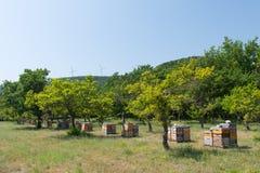 Крапивницы пчелы в саде Стоковое Фото