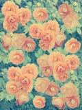 Красивая абстрактная предпосылка с розами стоковая фотография rf
