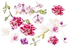 Красивая акварель установленная с орхидеями Стоковые Изображения RF