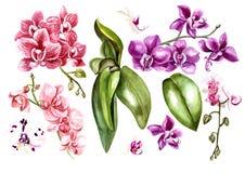 Красивая акварель установленная с орхидеями Стоковая Фотография RF