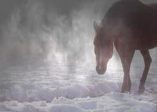 Красивая аравийская лошадь в тумане Стоковое Изображение