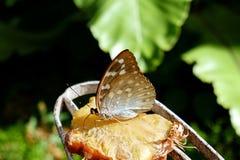Красивая бабочка Брауна в парке города стоковые фото