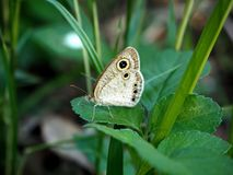 Красивая бабочка и зеленые лист Стоковое Фото