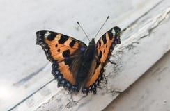 Красивая бабочка на окне стоковая фотография