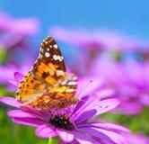 Красивая бабочка на фиолетовом цветке Стоковая Фотография RF