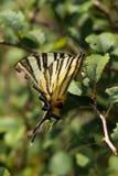 Красивая бабочка на цветке в природе Стоковые Фото