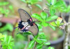 Красивая бабочка сидя на листьях деревьев Стоковые Фото