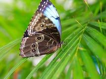 Красивая бабочка сидит на больших лист Стоковые Изображения RF