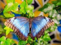 Красивая бабочка сидит на больших лист Стоковые Фото