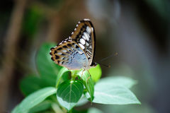 Красивая бабочка сидя на лист Стоковое фото RF
