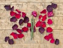 Красивая бабочка сухих лепестков розы и цветков сбор винограда бумаги орнамента предпосылки геометрический старый Стоковое Изображение