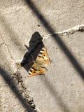 Красивая бабочка цвета yello на поле стоковые фотографии rf