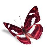 Красивая бабочка стоковые изображения rf