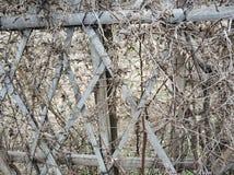 Красивая бамбуковая загородка с vince стоковое фото