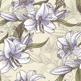 Красивая безшовная картина с лилиями Стоковая Фотография