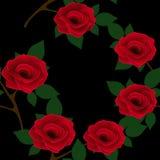 Красивая безшовная картина с красными розами на черной предпосылке Стоковые Фото