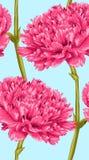 Красивая безшовная предпосылка с розовой гвоздикой иллюстрация штока