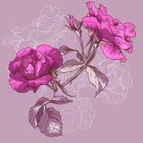 Красивая безшовная розовая предпосылка Стоковые Изображения RF