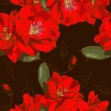 Красивая безшовная флористическая картина Стоковое Изображение