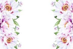 Красивая белая рамка границы пиона E Флористическая печать Чертеж отметки иллюстрация штока