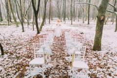 Красивая белокурая невеста представляя в стульях свадьбы леса осени винтажных на переднем плане Стоковая Фотография