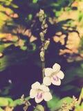 Красивая белая и фиолетовая предпосылка цветка Стоковые Фото