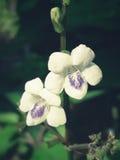 Красивая белая и фиолетовая предпосылка цветка Стоковое Фото