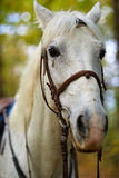 Красивая белая лошадь в лесе Стоковые Фото