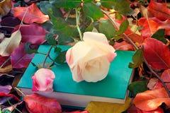Красивая белая роза и книга среди желтых листьев осени Стоковые Изображения RF