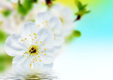 Красивая весна цветет предпосылка – цветение Стоковое Изображение RF