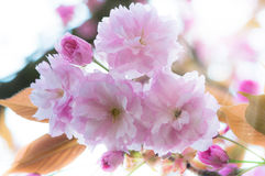 Красивая весна цветет предпосылка Стоковое Изображение RF