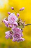 Красивая весна цветет предпосылка Стоковые Изображения
