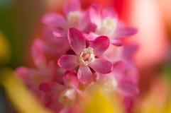 Красивая весна цветет предпосылка Стоковое Фото