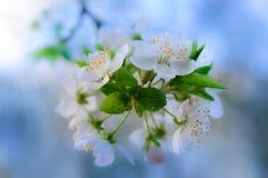 Красивая весна цветет предпосылка Стоковые Фотографии RF