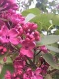Красивая весна Стоковое Изображение