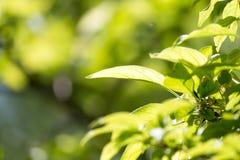 Красивая ветвь дерева в природе Стоковое Фото
