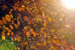 Красивая ветвь дерева в солнечном свете осени Стоковое фото RF
