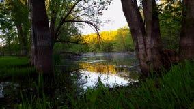 Красивая вода пруда в утре окруженная waterhole леса сценарным с туманом росы утра на зеленой траве акции видеоматериалы
