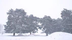 Красивая вьюга дерева природы рождества в ландшафте зимы в последнем вечере в ландшафте снежностей Стоковое Изображение RF
